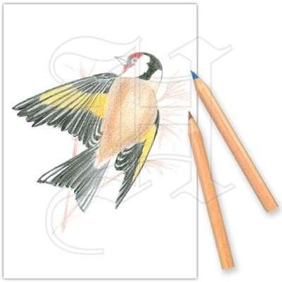 Colouring Set Garden Birds 1
