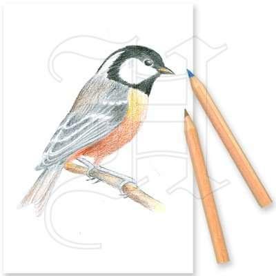 Colouring Set Garden Birds 2