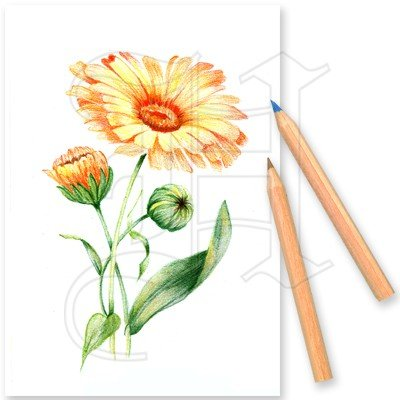 Colouring Set In The Garden 3