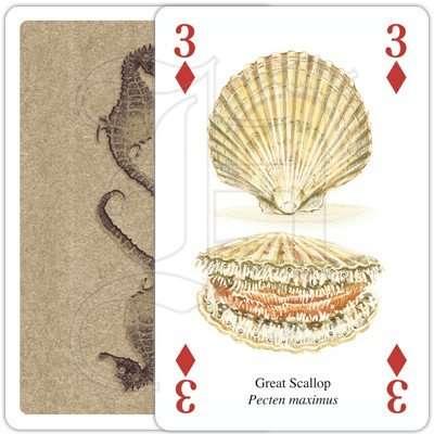 SEASHORE LIFE PLAYING CARDS 3