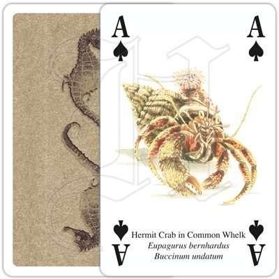 SEASHORE LIFE PLAYING CARDS 4