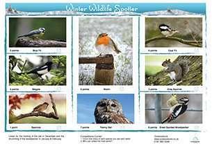 Winter Bird Care packs